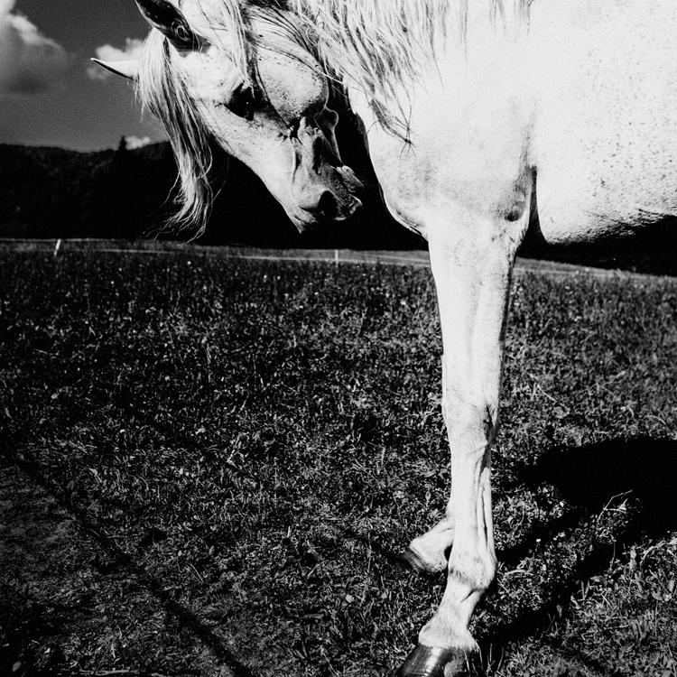 A Stubborn Horse
